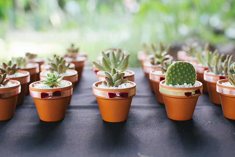succulents in tiny pots for wedding favours